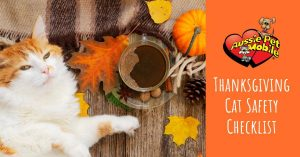 Thanksgiving Cat Safety Checklist