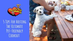 5 Tips For Hosting The Ultimate Pet-Friendly Cookout-Aug-2021